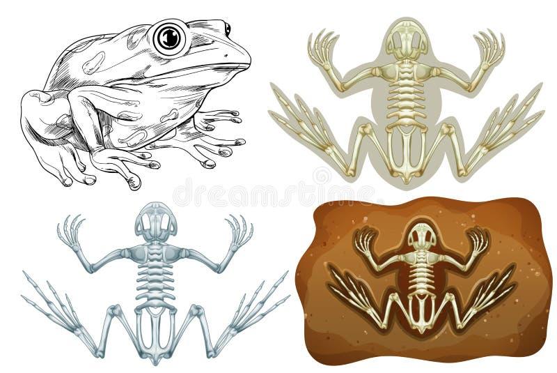 Frosch und Fossil Untertage lizenzfreie abbildung