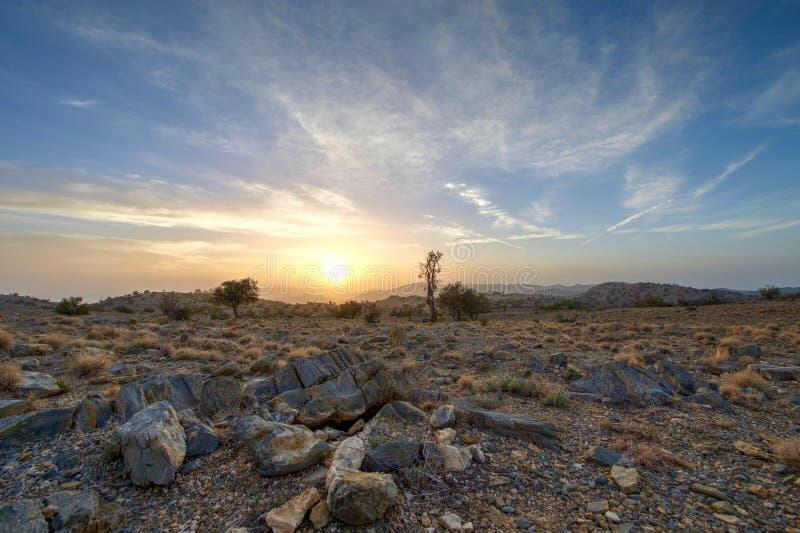 Froschperspektive von einem Sonnenaufgang stockbilder