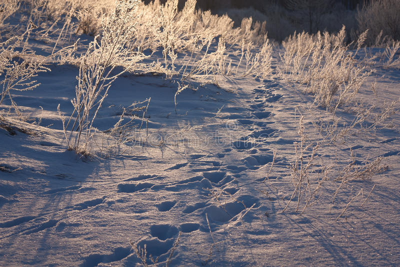 Frosen meadow in winter royalty free stock images