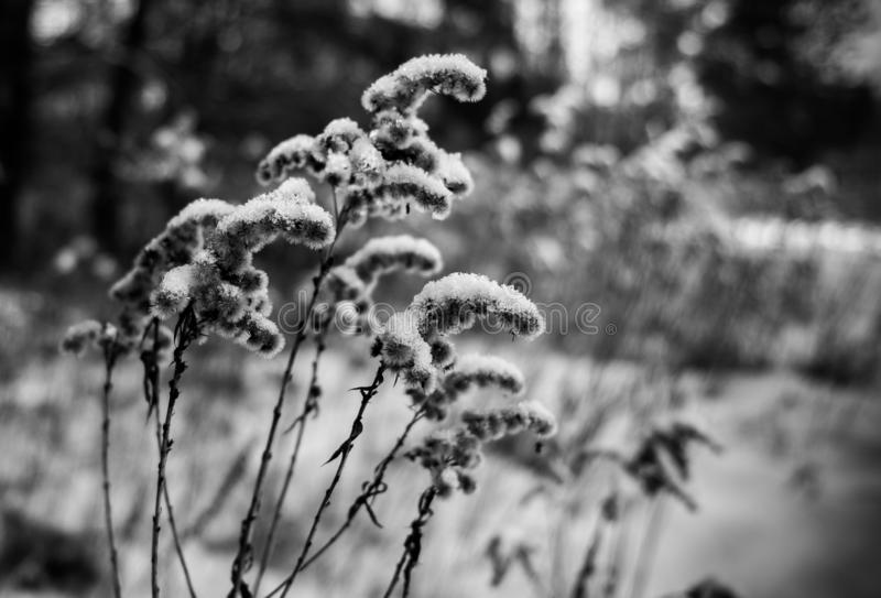 Frozen Plants covert with ice royalty free stock photo