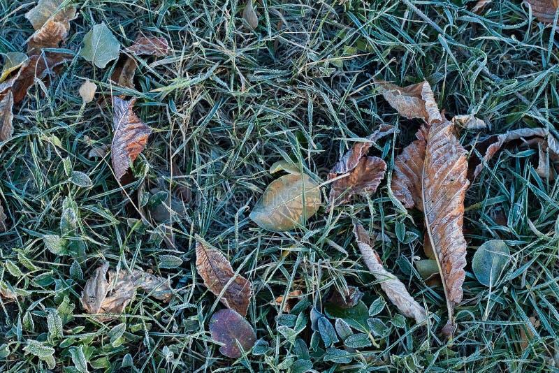Frost на траве и сухих листьях стоковая фотография rf