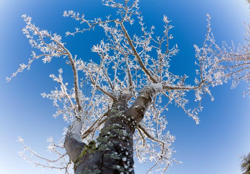 Frost stockbilder