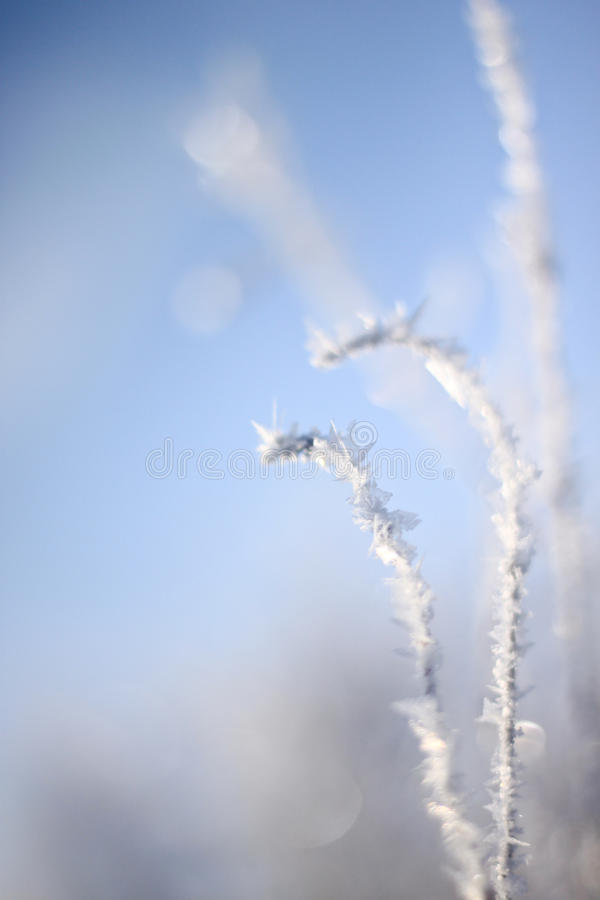 Download Frost Stock Images - Image: 23398424