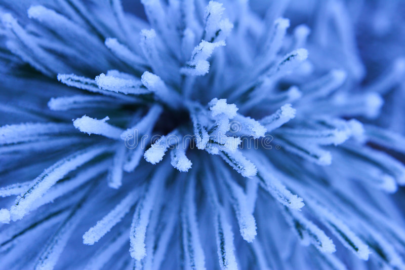 Frost. Water is changed winter and create various fabulous forms stock photos