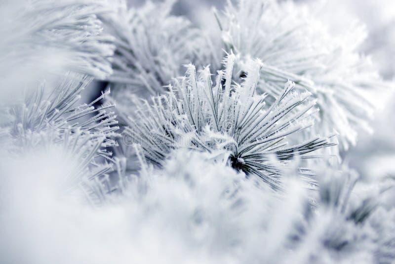 Frost stockfotos