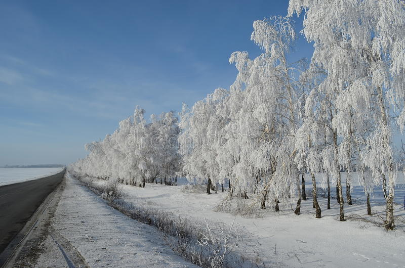 Frost. On the trees along the road stock images