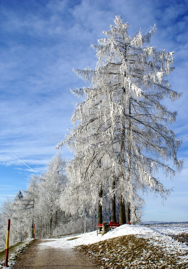 frost fotografering för bildbyråer