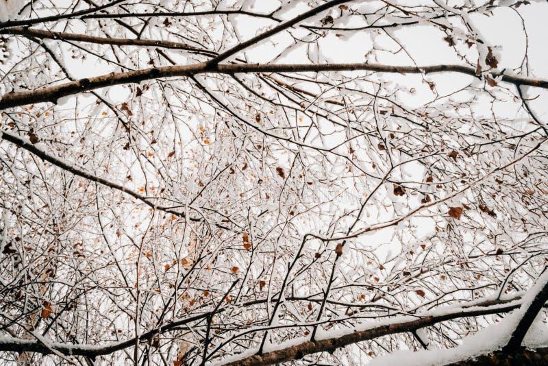 Frost и лед на ветвях стоковые изображения rf