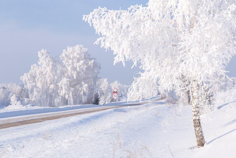 Frost auf Bäumen lizenzfreie stockfotos