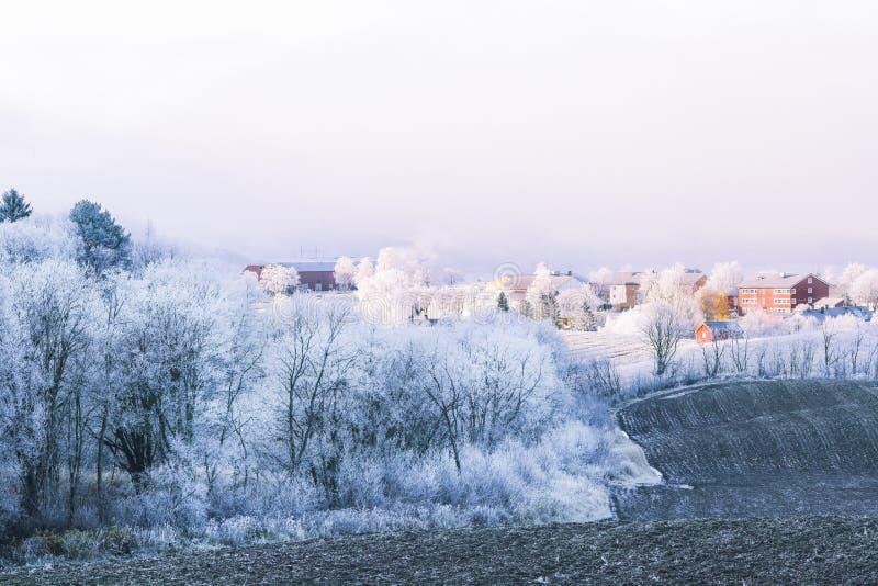 Frost auf der Landseite lizenzfreies stockfoto