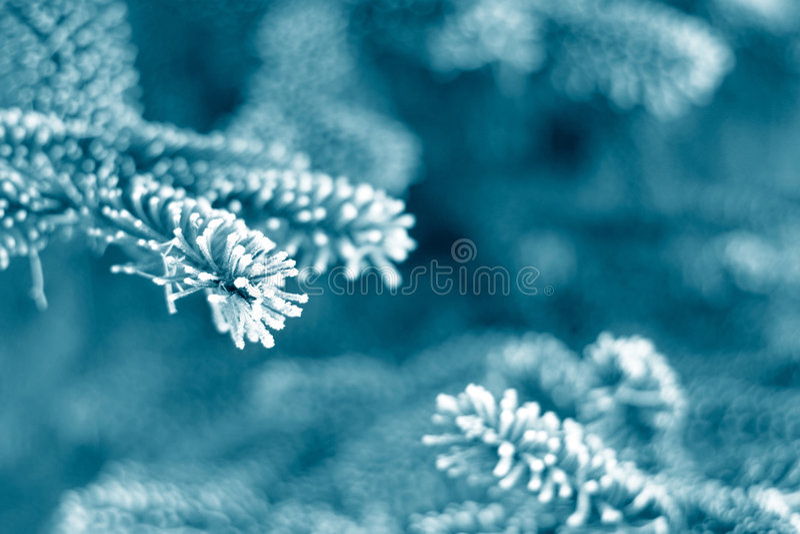 Frost auf Kiefer lizenzfreies stockfoto