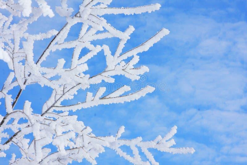 Frost auf Winterzweigen stockbild