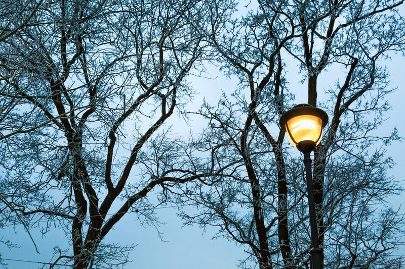 Frost on the bare branches of trees and street light at dark winter evening in city park. Silhouette of woods and street post. royalty free stock photography