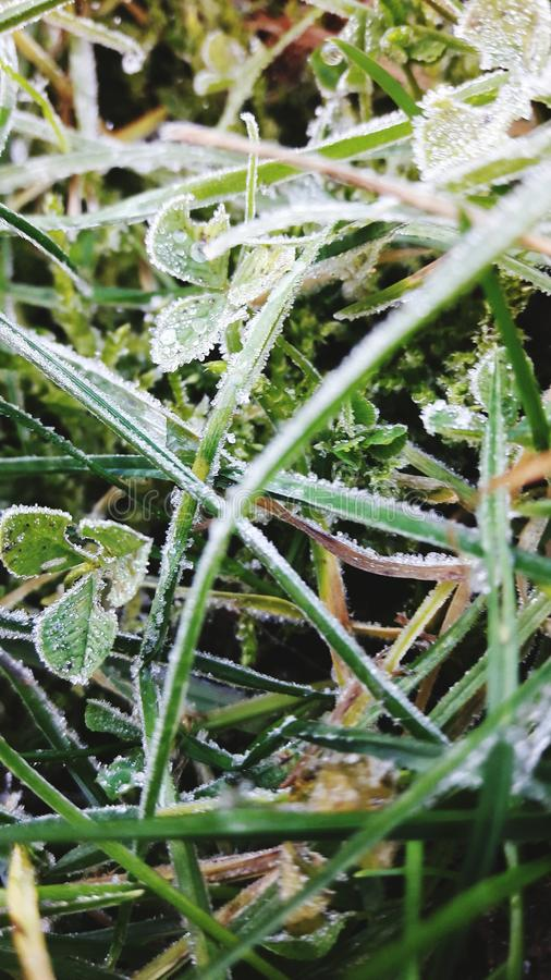 FROST BITE royalty free stock photography