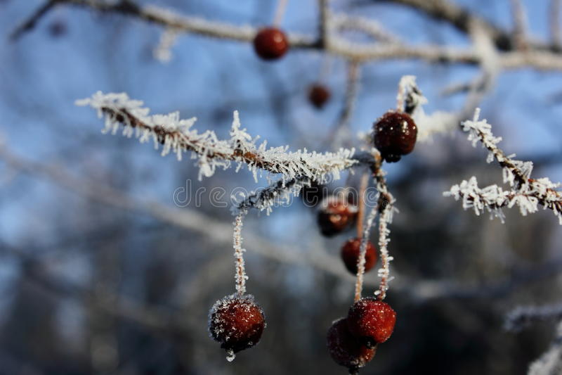The frost has shrouded royalty free stock photography