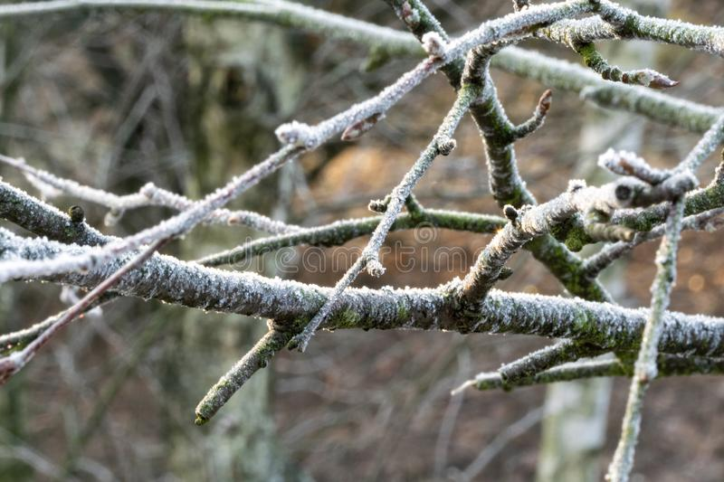 Frost on branches. Branches with frost. Frozen trees in the forest royalty free stock image