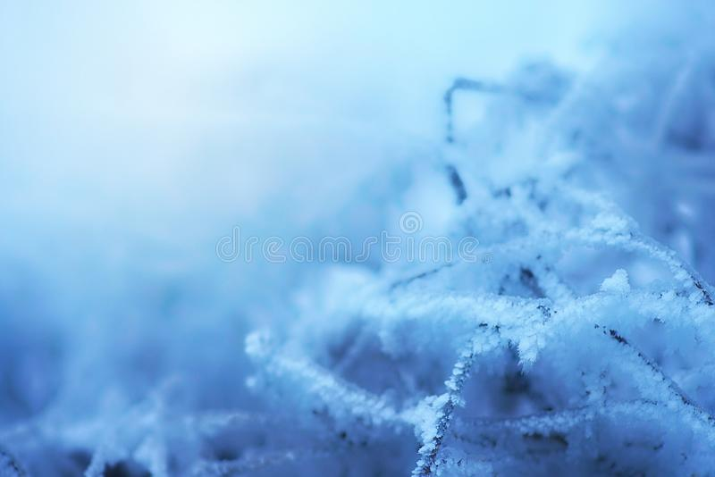 The frost on the branches of plants. Winter nature. Cold weather. Climate change. The Northern cold stock photos