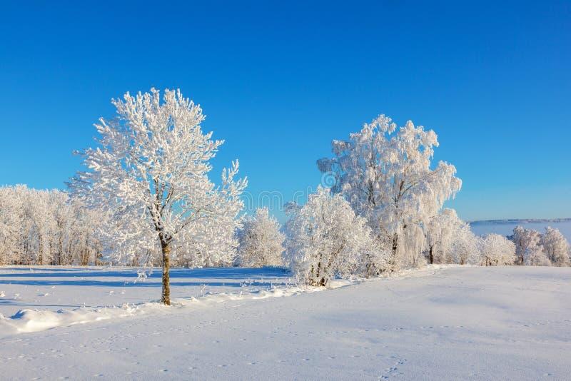 Frost cobriu árvores na paisagem da neve imagem de stock