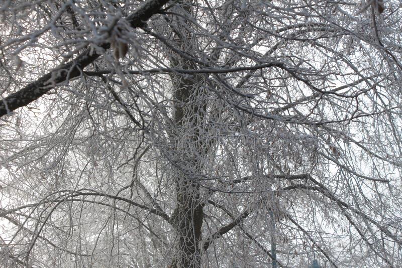 Frost a couvert des arbres photo stock
