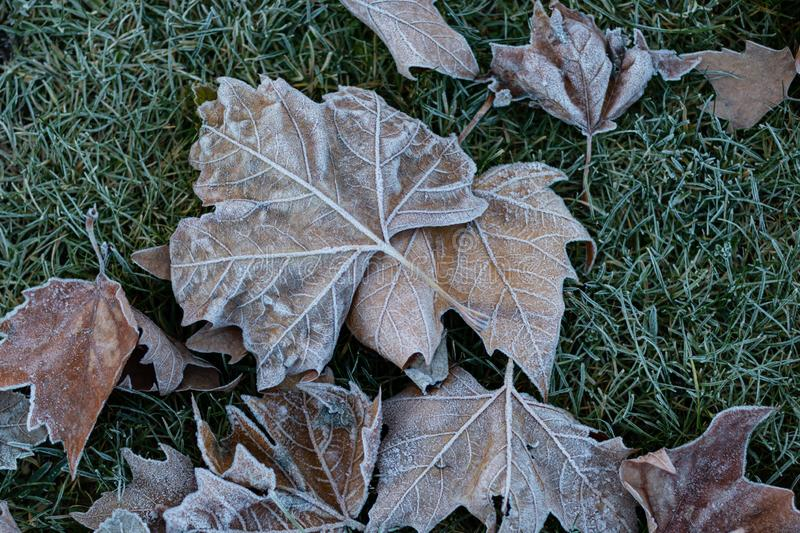 Frosty leaves on grass stock photography