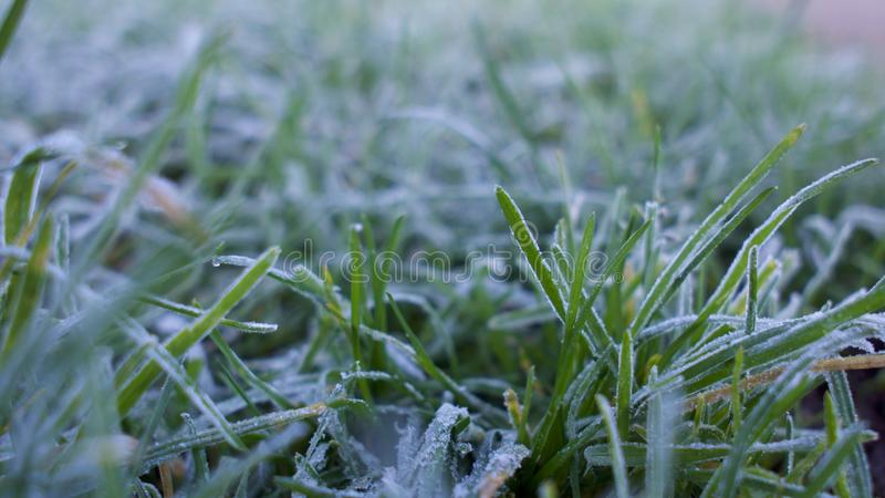 Frost covered grass. A close up view of frost / frozen water droplets on green grass in winter royalty free stock photo