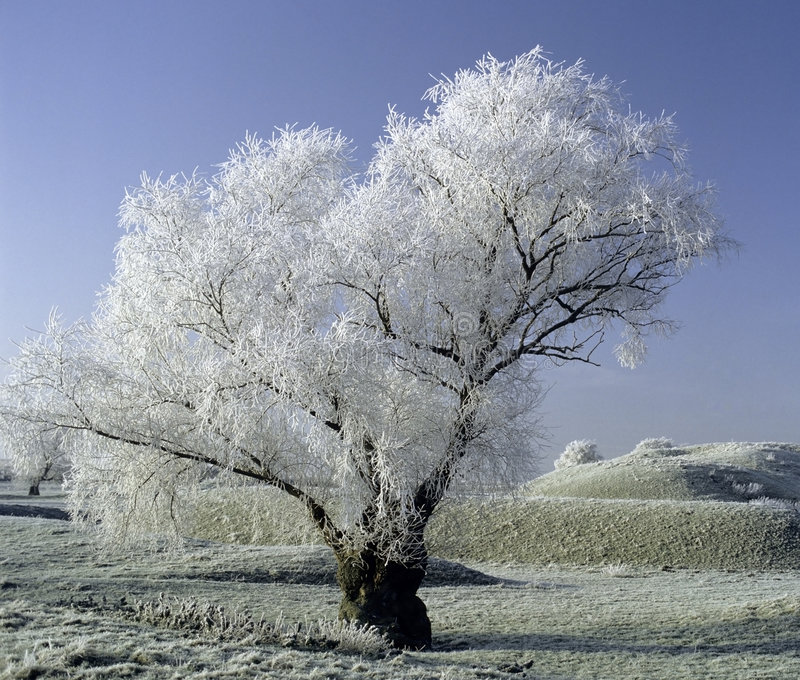 Frost covered landscape stock images