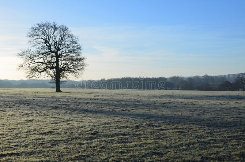 Frost covered landscape in England. stock image