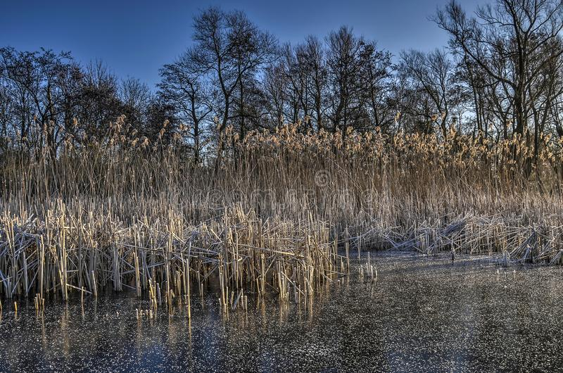 Ice, reeds, trees and sky royalty free stock photos
