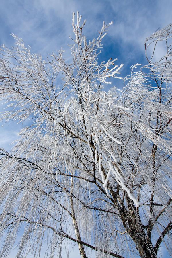 Frost covered tree stock images