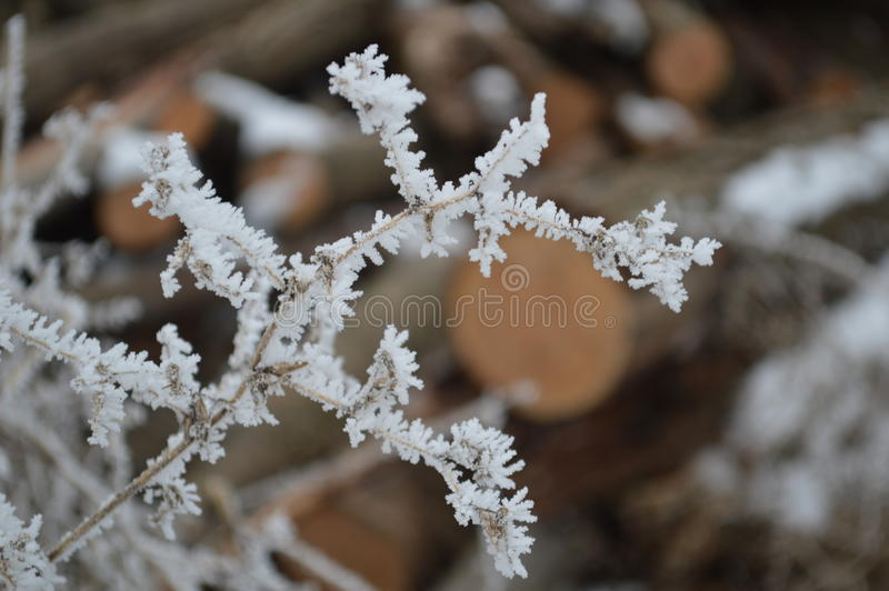 Download Frost Covered Twigs Close Up Stock Photo - Image of twigs, white: 84016540
