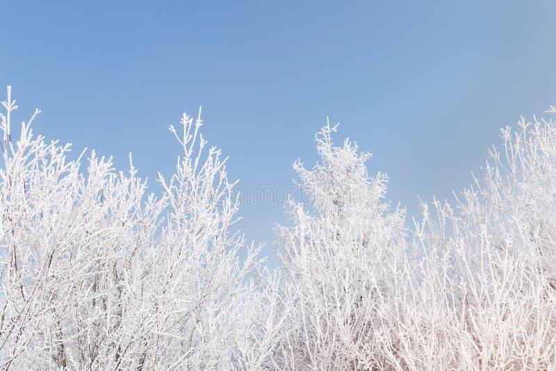 Frost cubrió ramas de árbol contra el cielo azul foto de archivo libre de regalías