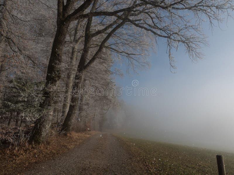 Frost dans la forêt des Alpes suisses photographie stock
