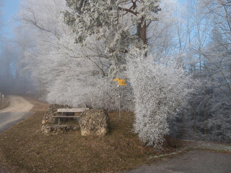 Frost dans la forêt des Alpes suisses photo libre de droits