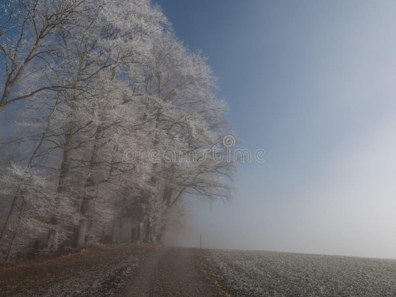 Frost dans la forêt des Alpes suisses image libre de droits