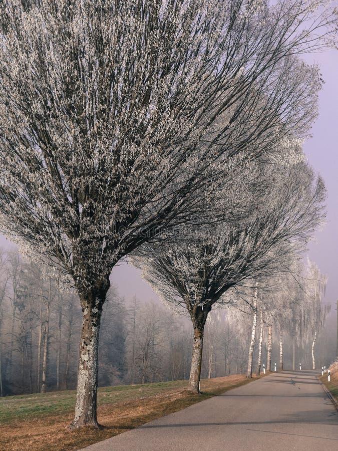 Frost dans la forêt des Alpes suisses images stock