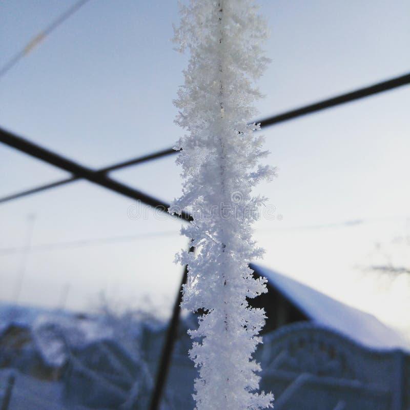 Frost dekorerar allt omkring arkivbilder