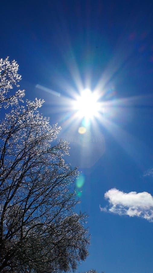 Frost, dunkelblauer Himmel stockfoto
