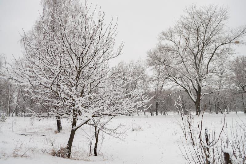 Frost, dunkelblauer Himmel Fluss eingefroren - bedeckt mit dem Eis und kahlen B?umen bedeckt mit wei?em Schnee auf dort Niederlas stockfotografie