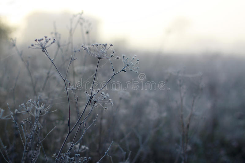 Frost. On an early autumn morning stock images