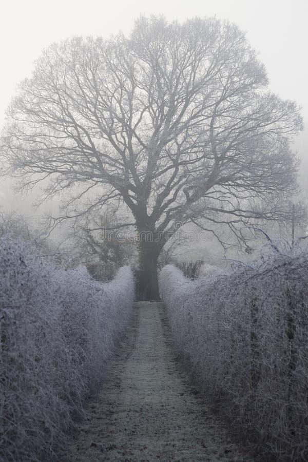 Frost em uma manhã do ` s do inverno imagens de stock