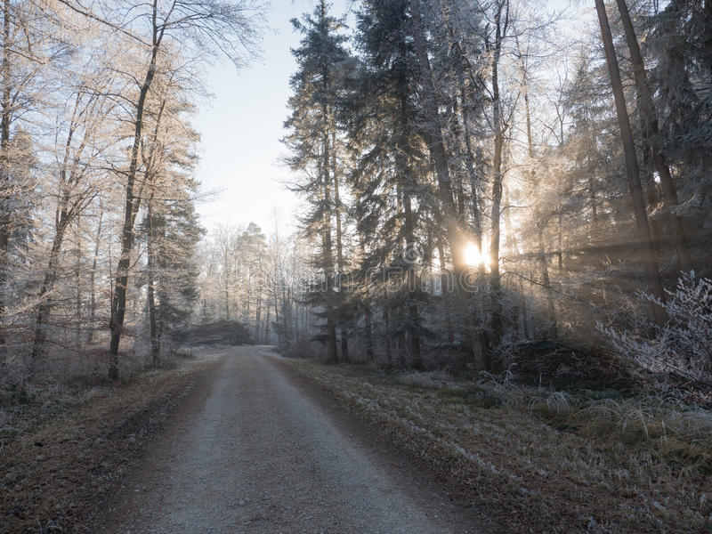 Frost en el bosque de las montañas suizas imágenes de archivo libres de regalías