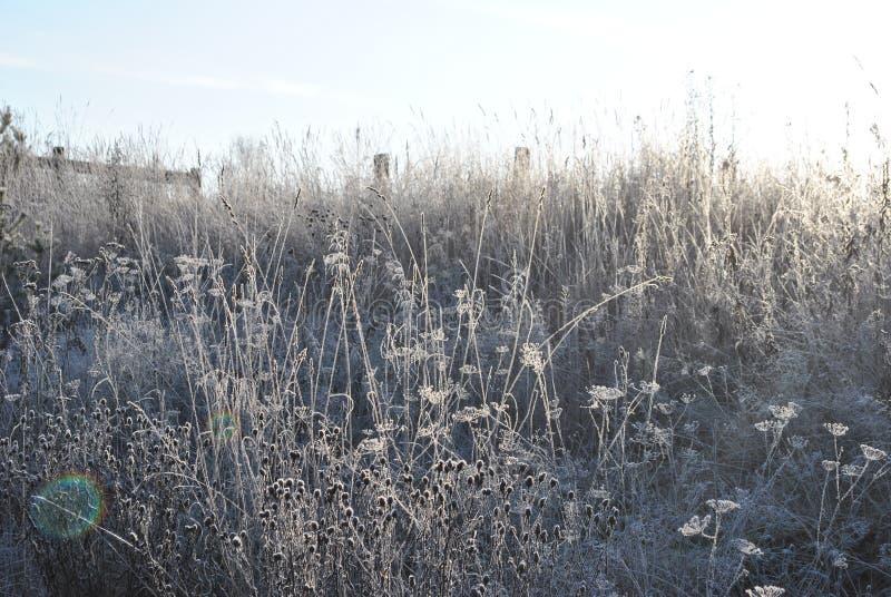Frost en la hierba imagenes de archivo