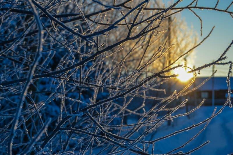 Frost en los reflejos de las ramas en los rayos del sol poniente foto de archivo libre de regalías