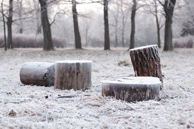 Frost en los tocones foto de archivo libre de regalías