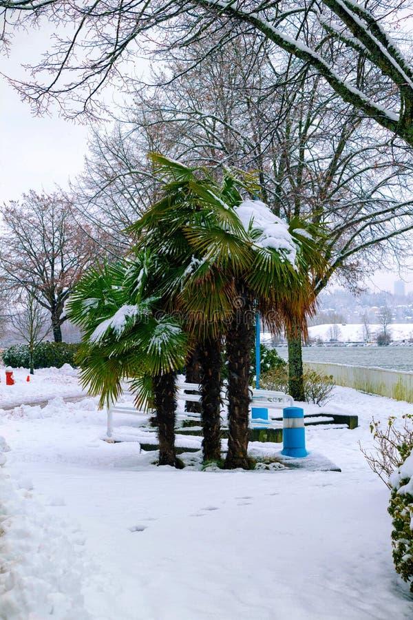 Frost a enduit le palmier canadien photos libres de droits
