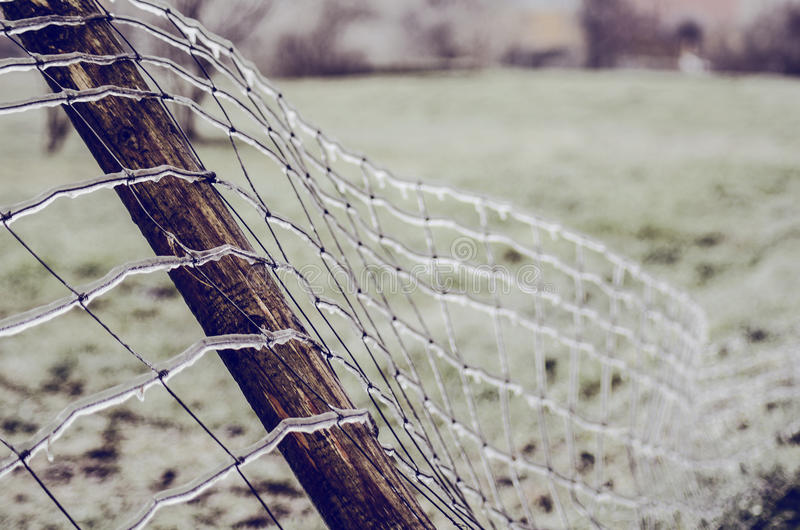 Frost on Fence royalty free stock image