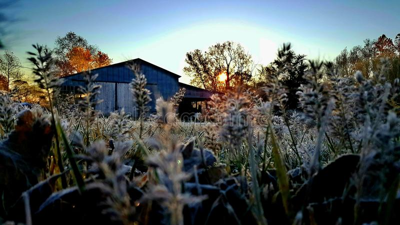Frost... First hard frost of 2016 in Missouri royalty free stock photo
