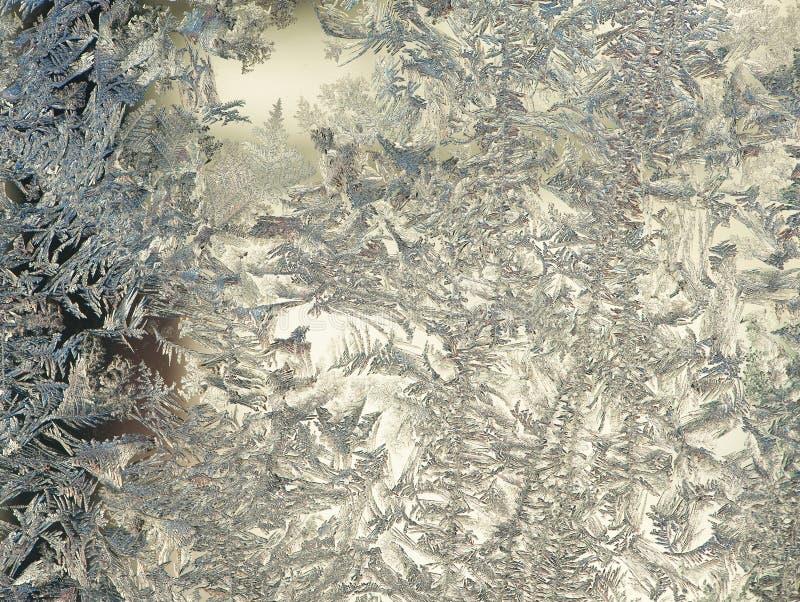 FrostFlowers royalty free stock image