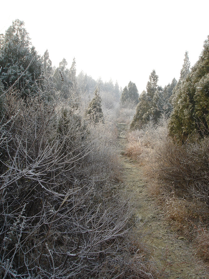 Frost forest stock image