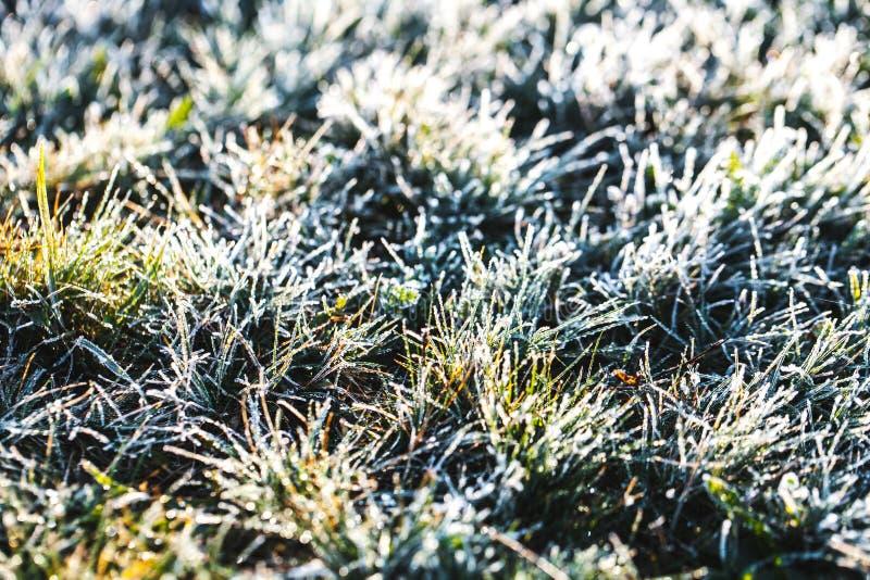 Frost-Gras nach einer kalten Nacht im Winter stockbild
